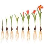 How Can I Help Others Grow In Faith?